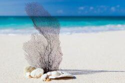sea debris on the beach