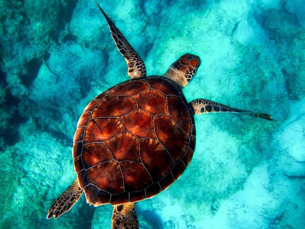 sea turtle swimming under water