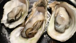 three oysters on the half shell
