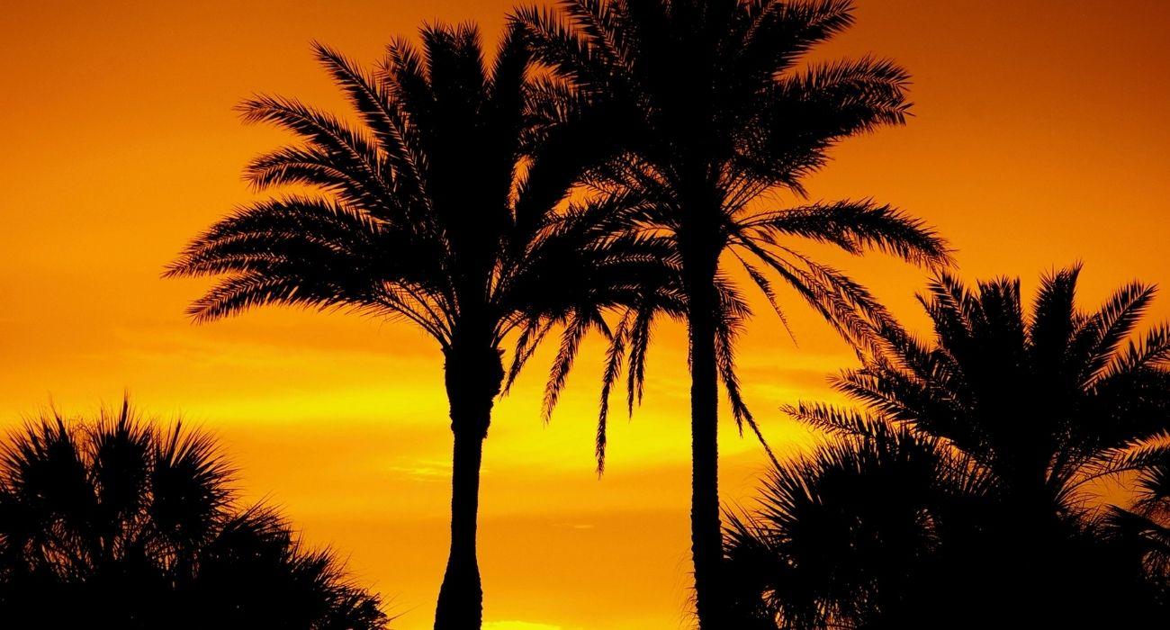 palm tree silhouettes in orange sunset